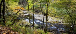Help us Clean up Smith Creek and its' Tributaries